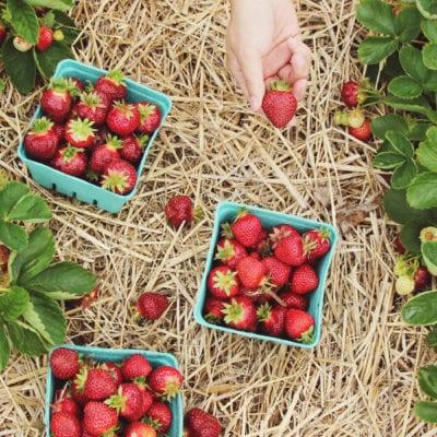 Vegane Rezepte mit Erdbeeren, meine Top Five.