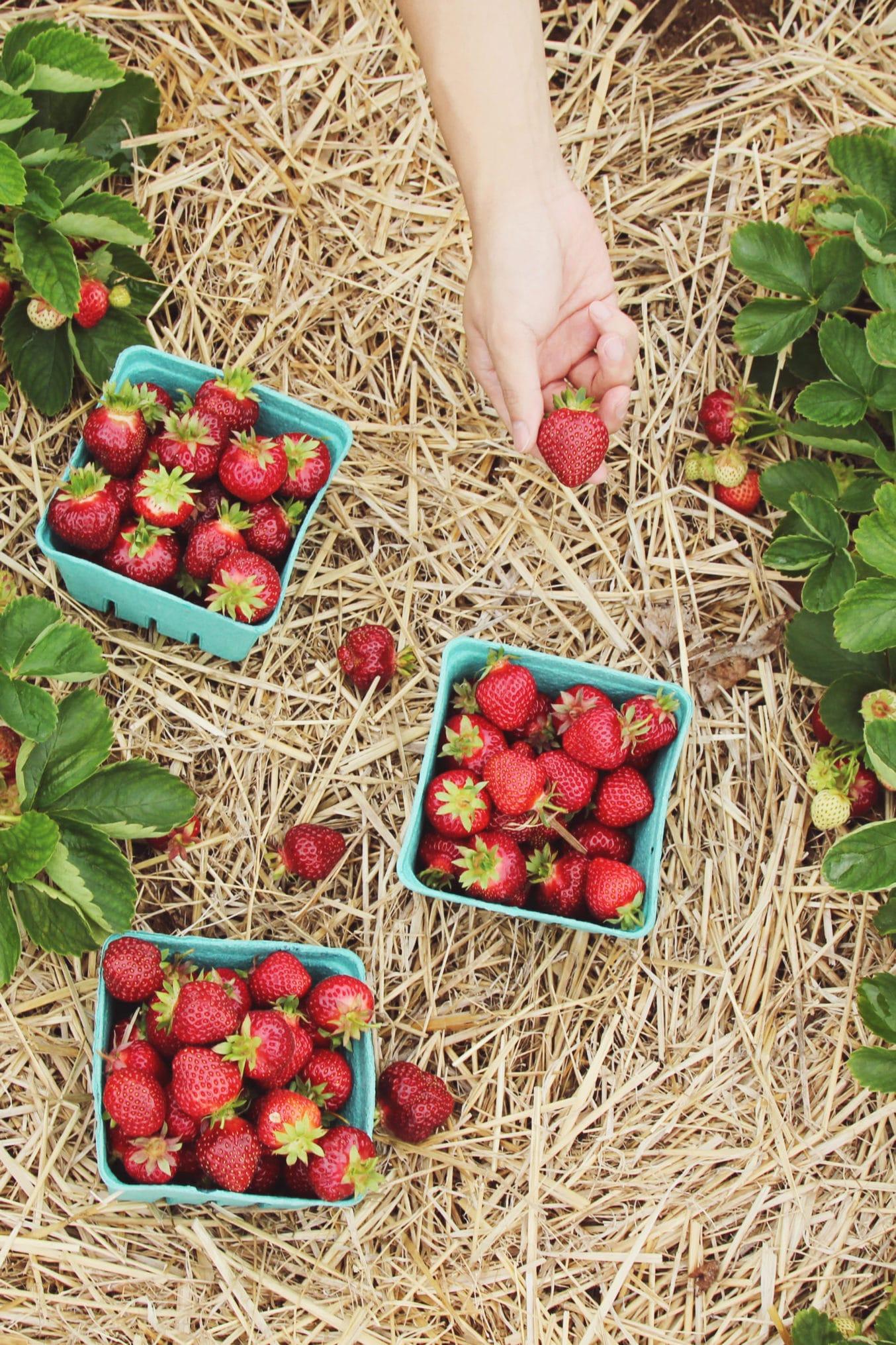 vegane Erdbeer Rezepte, die besten fünf