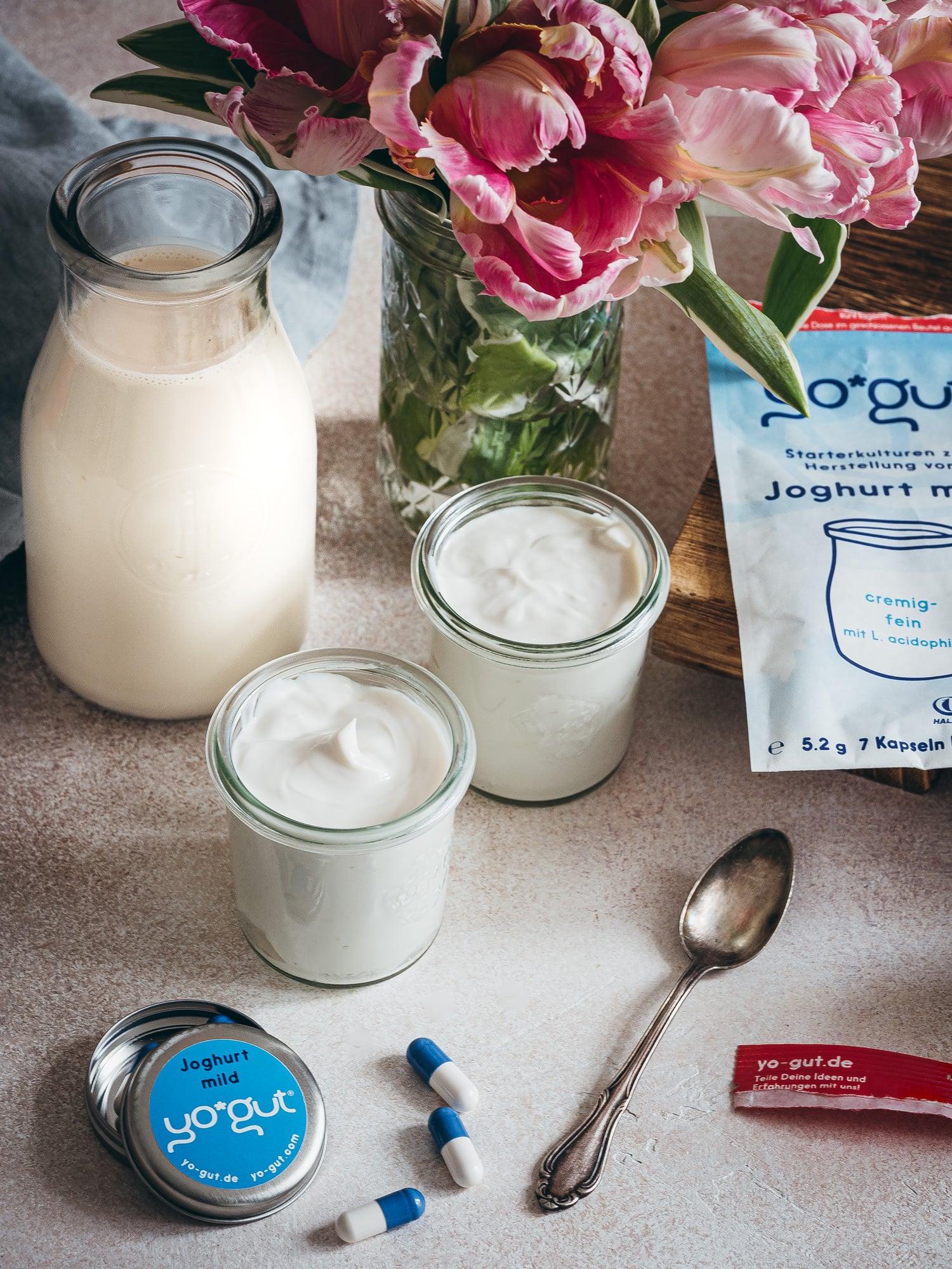Joghurtkulturen und frischer Joghurt mit pflanzlicher Milch